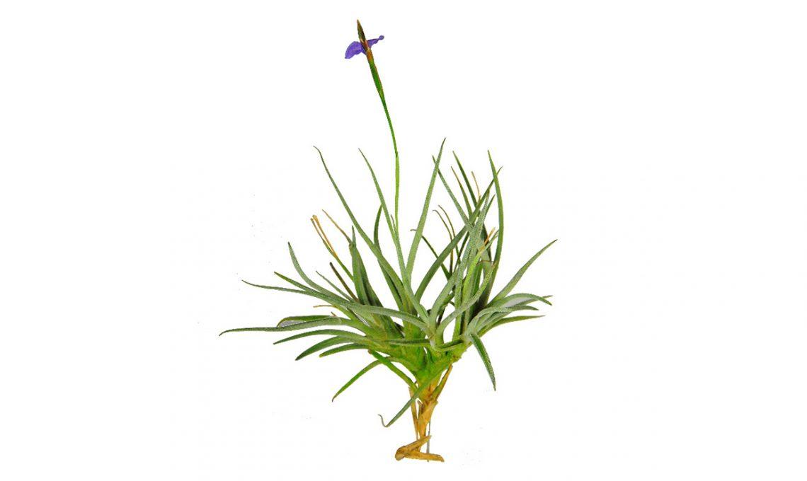 Le piante da mettere in bagno tillandsie e orchidee casafacile - Piante in bagno ...