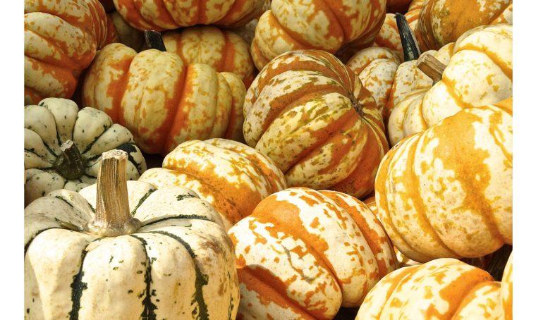 Zucche decorative: come farle seccare e conservarle
