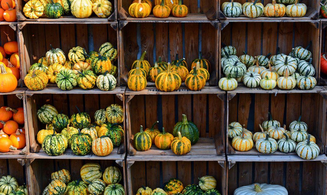 Essiccazione Zucca Di Halloween.Zucche Decorative Come Farle Seccare E Conservarle Casafacile