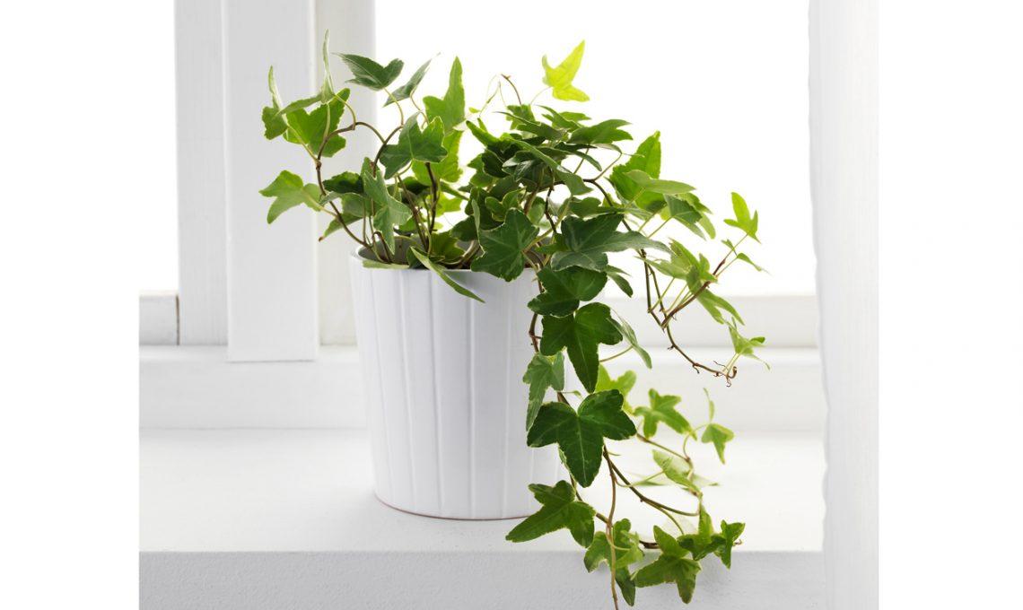 Le piante in camera da letto fanno male? - CASAfacile