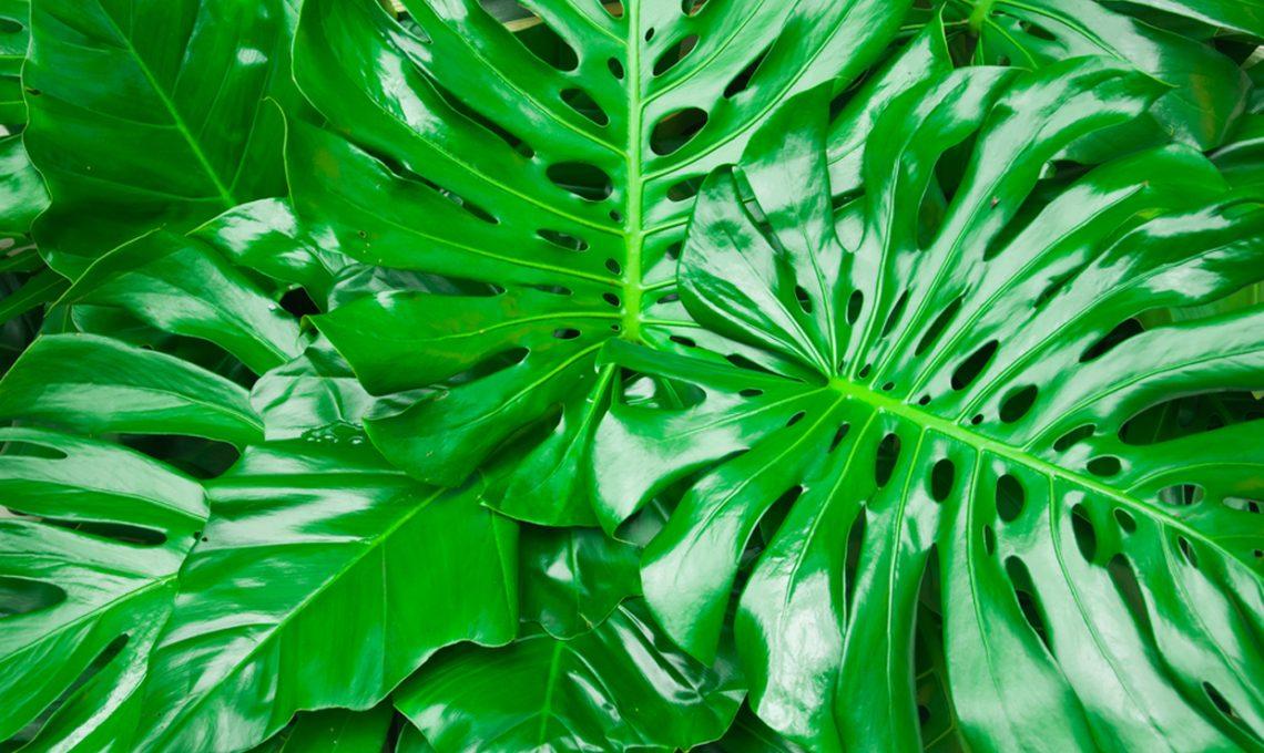 Pianta Camera Da Letto Ossigeno : Le piante in camera da letto fanno male casafacile