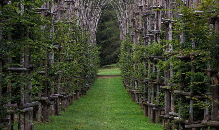 Hai mai visto una cattedrale vegetale?