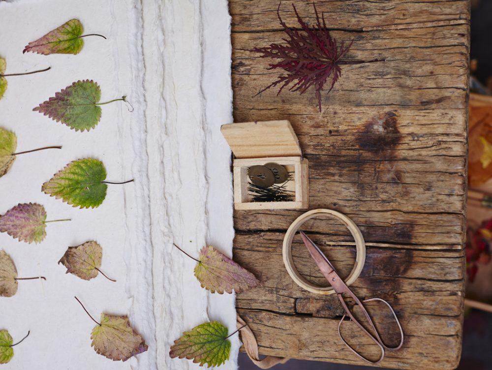 Come essiccare le foglie e fare l'erbario