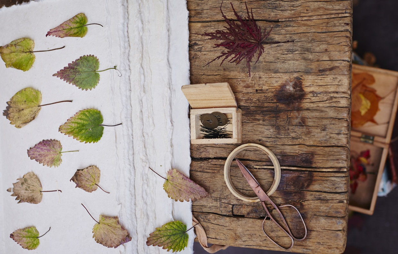 Come Costruire Un Erbario come essiccare le foglie e fare l'erbario - casafacile