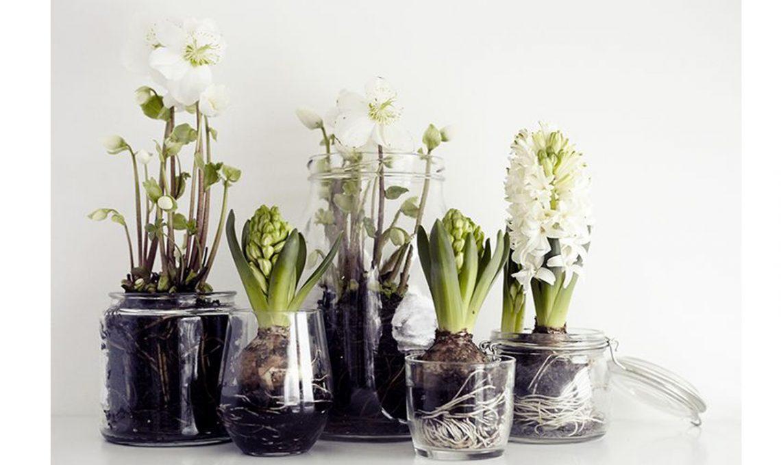 Come far crescere i bulbi in acqua casafacile - Vasi per arredo casa ...