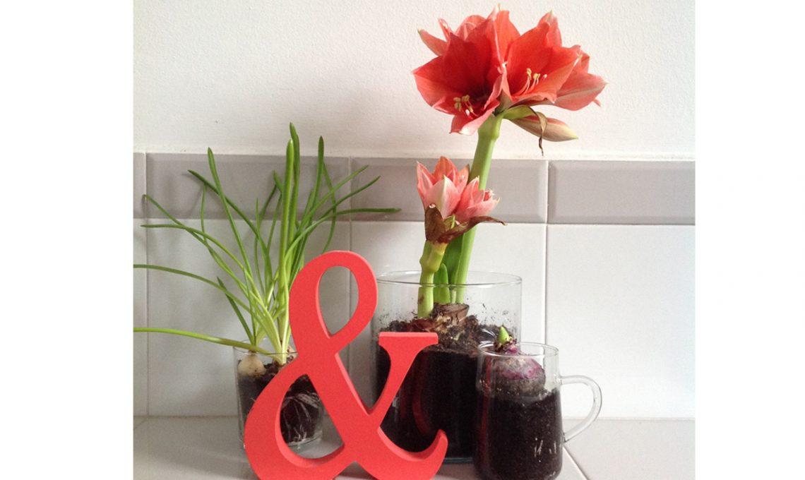 Bulbi In Vaso Di Vetro.Come Far Crescere I Bulbi In Acqua Casafacile