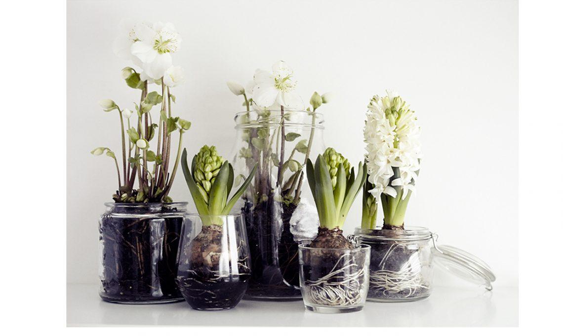 Riciclare la plastica: bottiglie come vasi di fiori