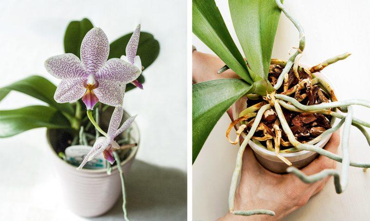 Orchidee: come curarle e coltivarle al meglio