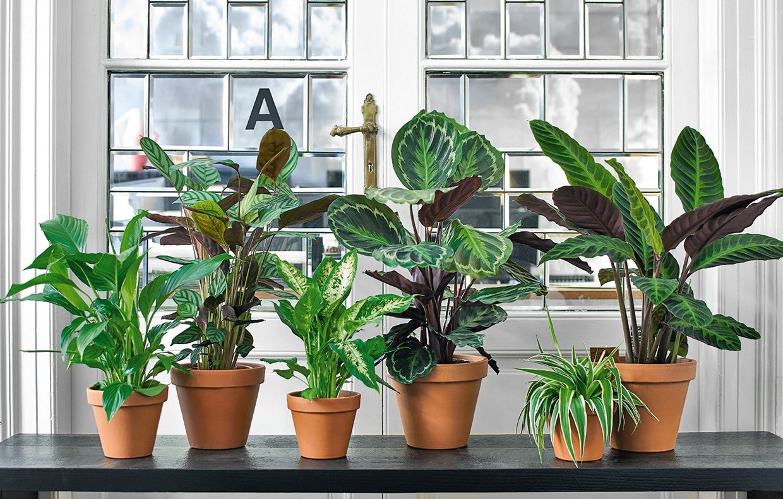Idee Bagno In Camera : Le piante antismog casafacile