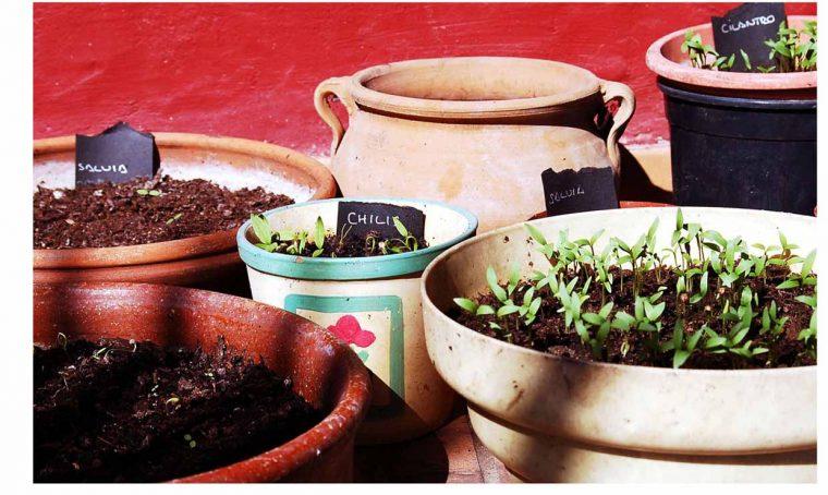 10 motivi per fare giardinaggio