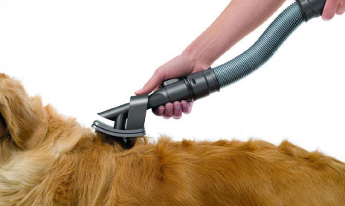 Animali in casa: consigli per le pulizie - CASAfacile