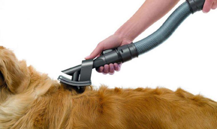 Animali in casa: consigli per le pulizie