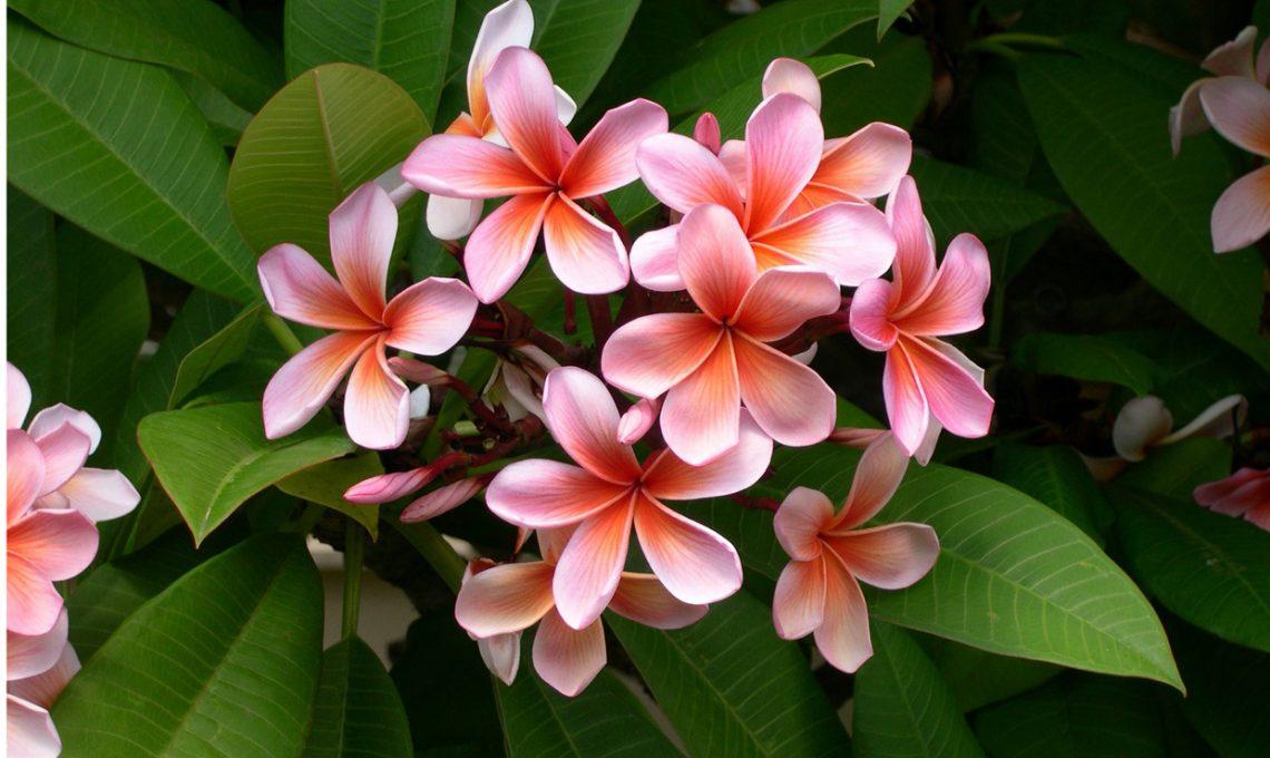 Piante dai fiori profumati casafacile for Piante e fiori