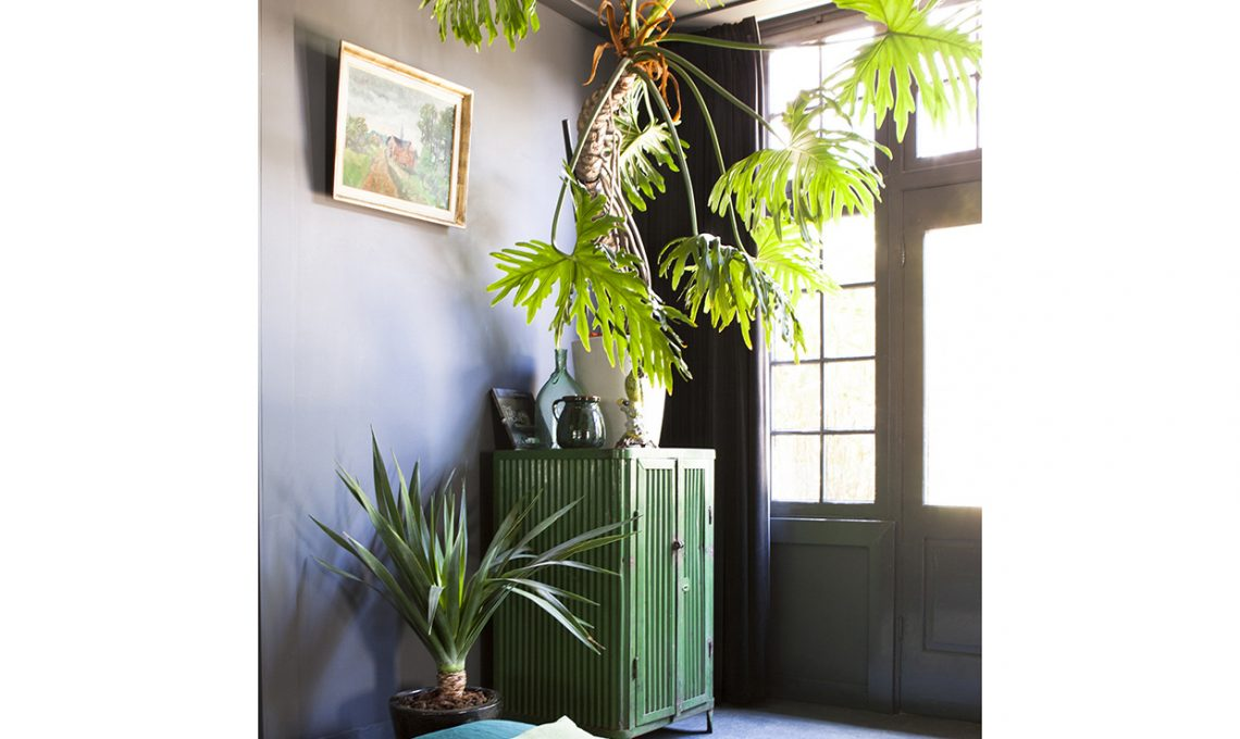 Come curare le piante tropicali casafacile for Curare le piante