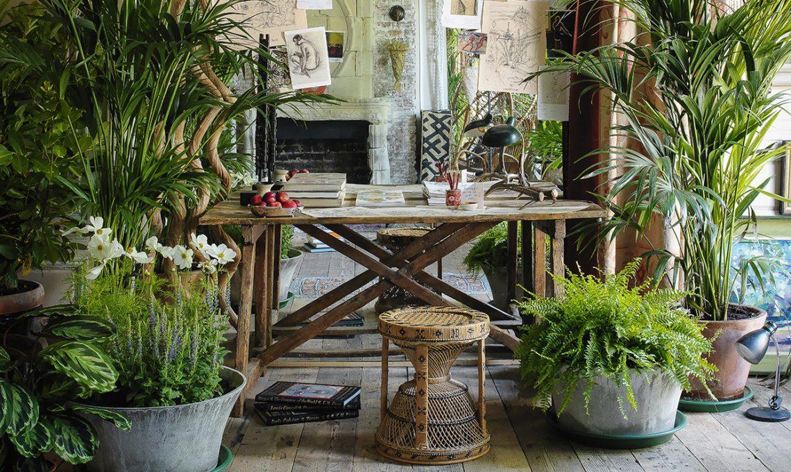 Come curare le piante tropicali casafacile for Piante da giardino tropicali