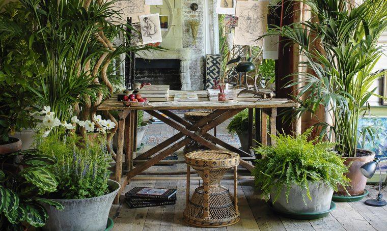 Come curare le piante tropicali