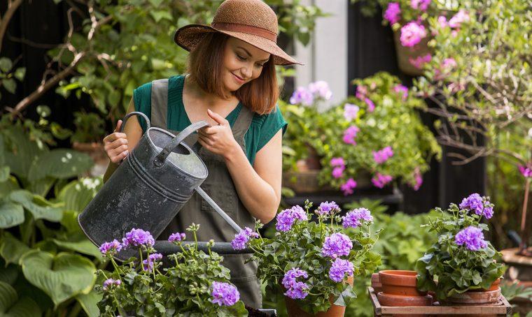 Pelargoni: una cascata di fiori e colori in giardino e sul balcone