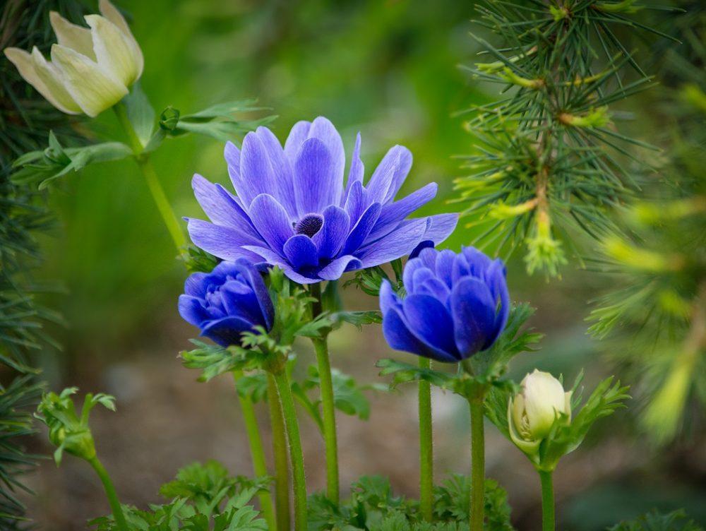 Piante che fioriscono in estate