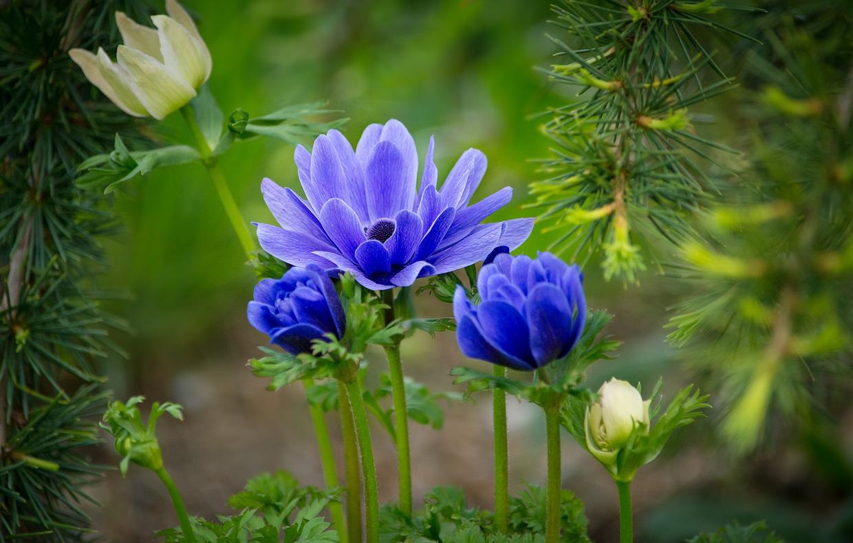 Piante Che Fioriscono Tutta Estate piante che fioriscono in estate - casafacile