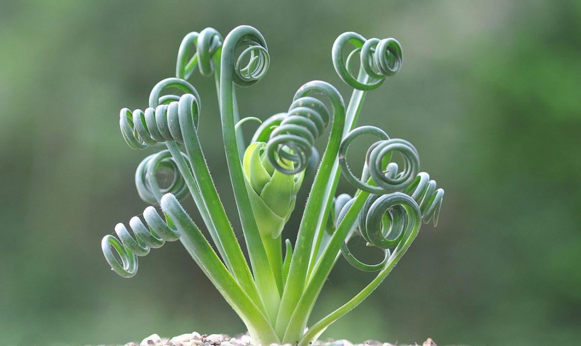 Come bagnare le piante grasse great innaffiare piante for Innaffiare aloe vera