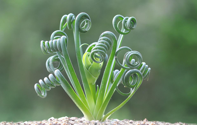 Piante Strane Da Appartamento piante grasse insolite - casafacile
