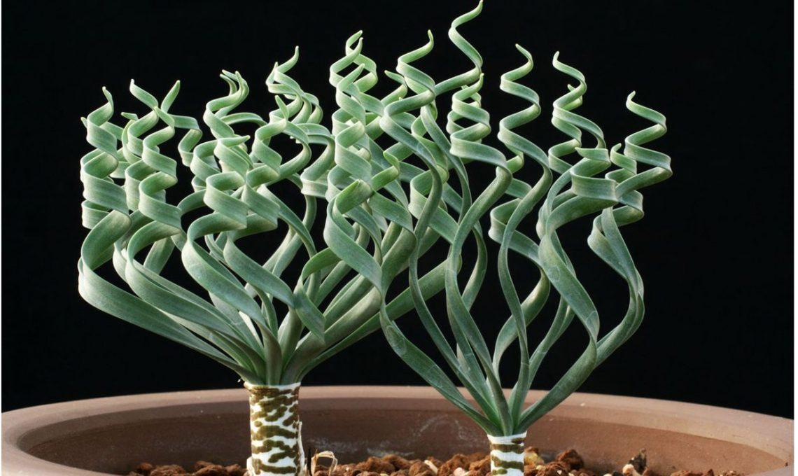 Piante grasse insolite casafacile for Foto piante grasse particolari