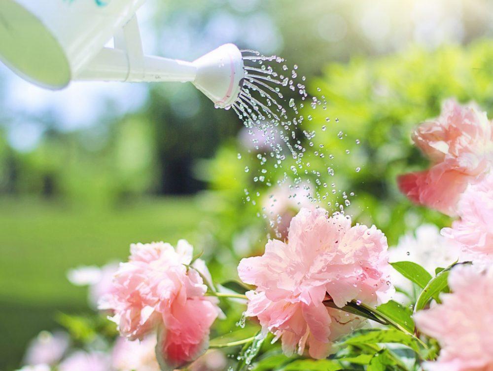Come e quando annaffiare le piante