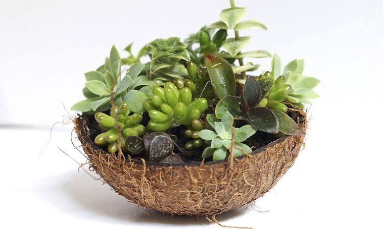 Contenitori creativi per piante grasse