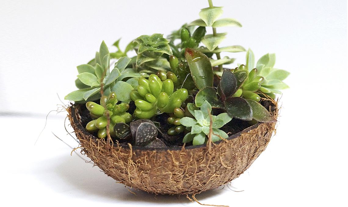Contenitori creativi per piante grasse casafacile for Piante grasse succulente