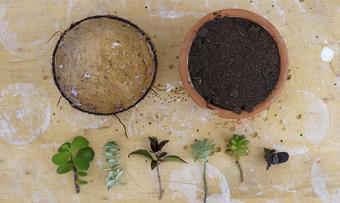 Piante Di Noce : Contenitori creativi per piante grasse casafacile