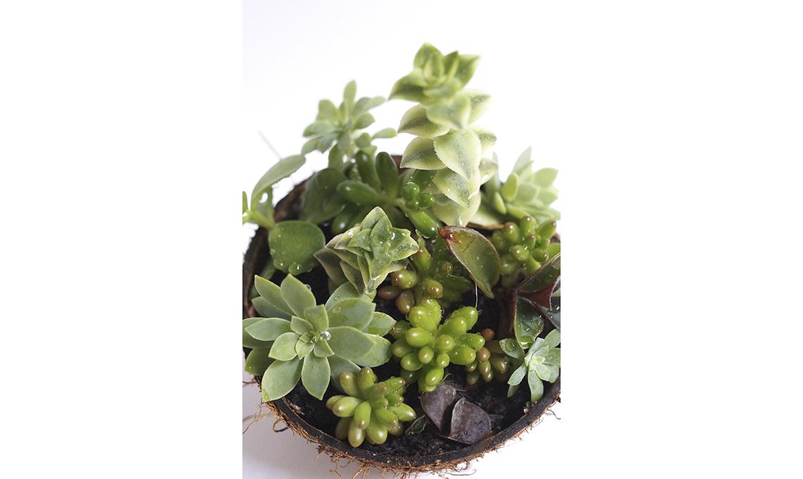 Contenitori creativi per piante grasse casafacile - Porta piante fai da te ...