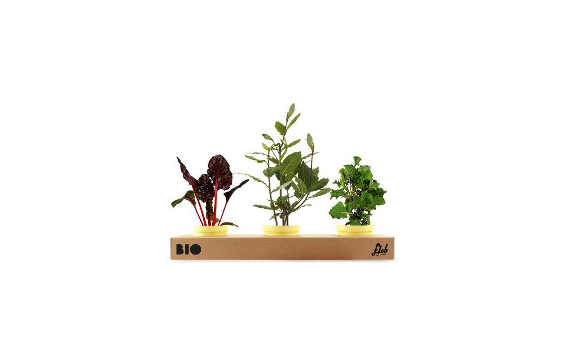 Un set di piante della nonna: alloro, bieta, cavolo var. Gemmifera / flobflower.com