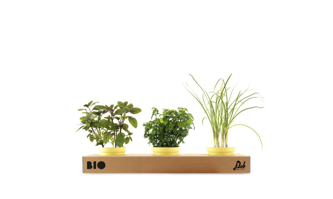 Un set di piante aromatiche dal sapore forte: basilico blu, erba aglio, erba fungo / flobflower.com