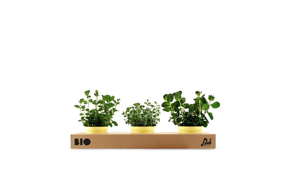 Un set di piante aromatiche freschissime: menta mandarino, menta marocchina, menta fragola / flobflower.com