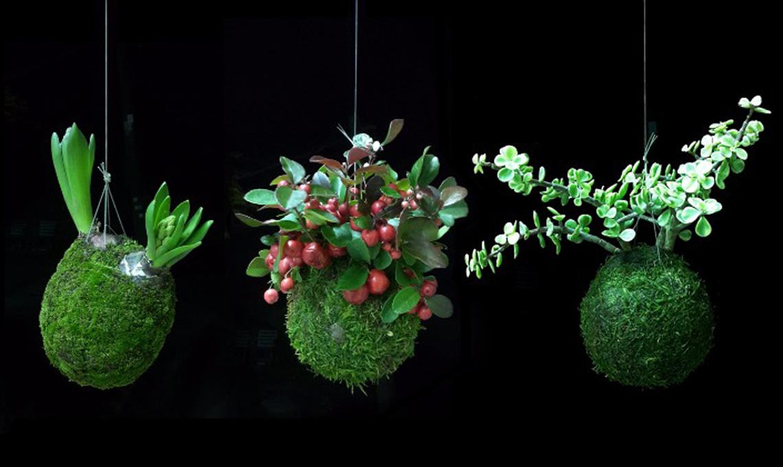 5 siti dove comprare fiori e piante online casafacile for Fiori e piante online