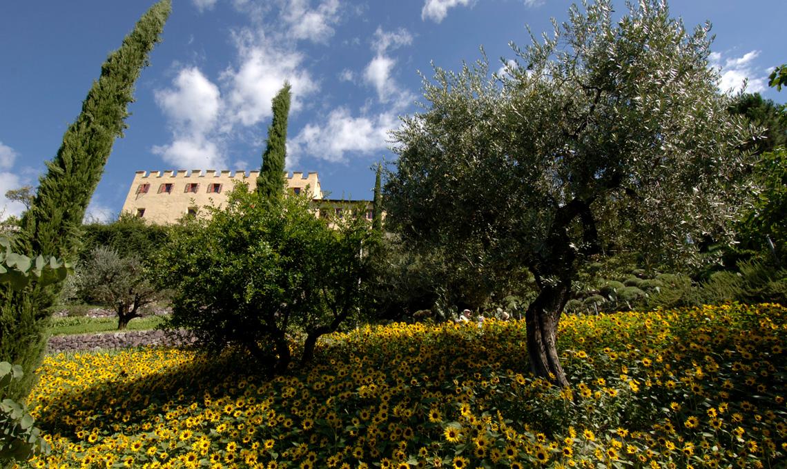 Oliveto - Giardini di Castel Trauttmansdorff