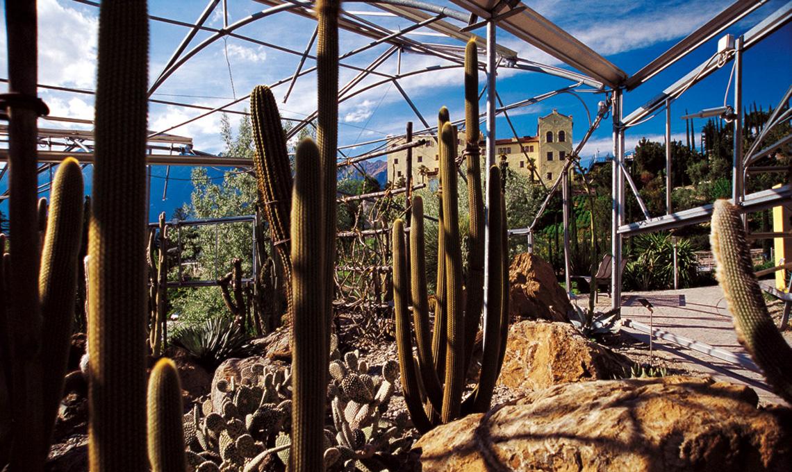 Cactus e succulente - Giardini di Castel Trauttmansdorff