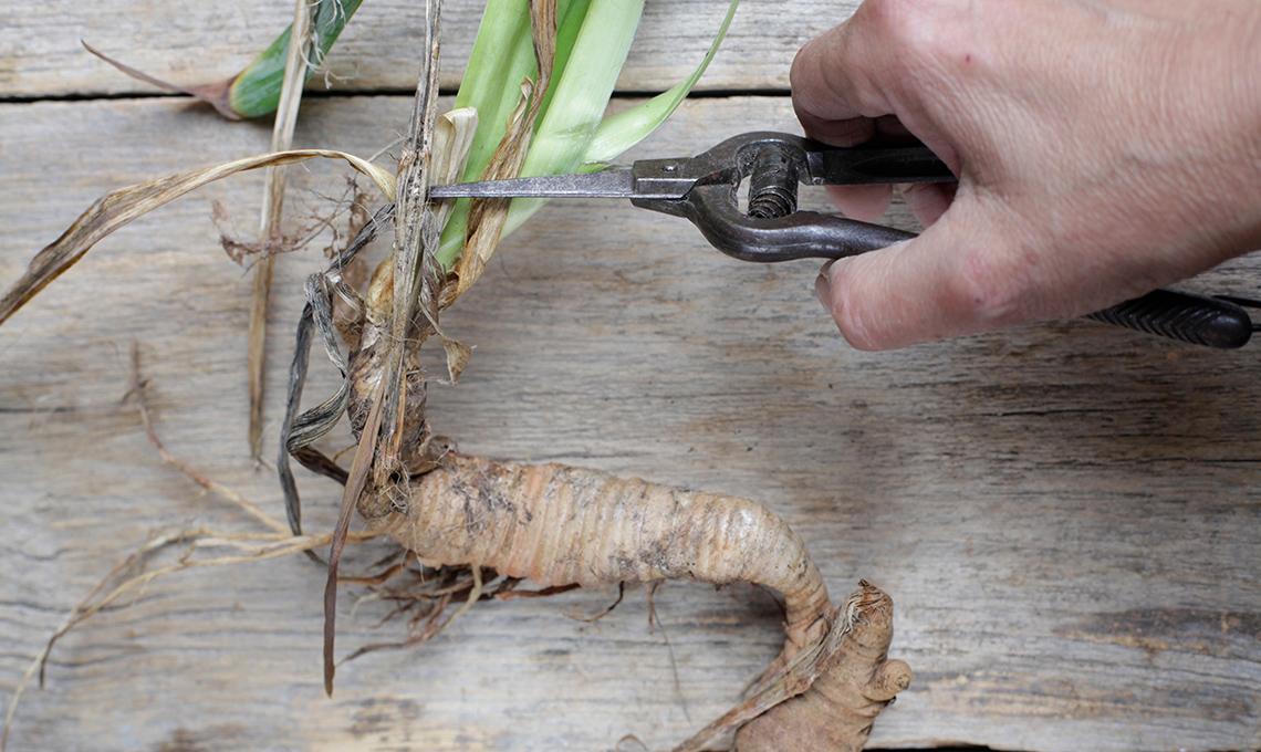 come dividere e moltiplicare iris