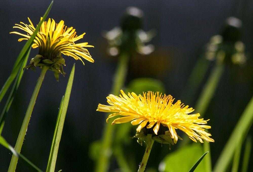 Osserva i fiori spontanei e capirai i tipi di terreno