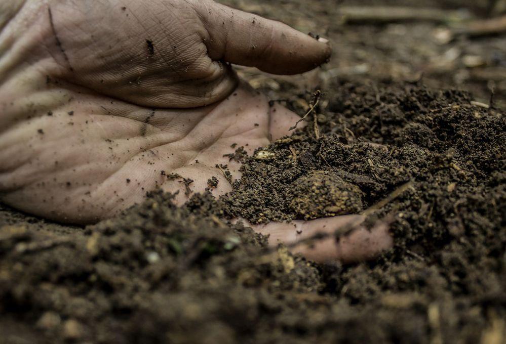 I test fai-da-te per riconoscere che terreno hai in giardino