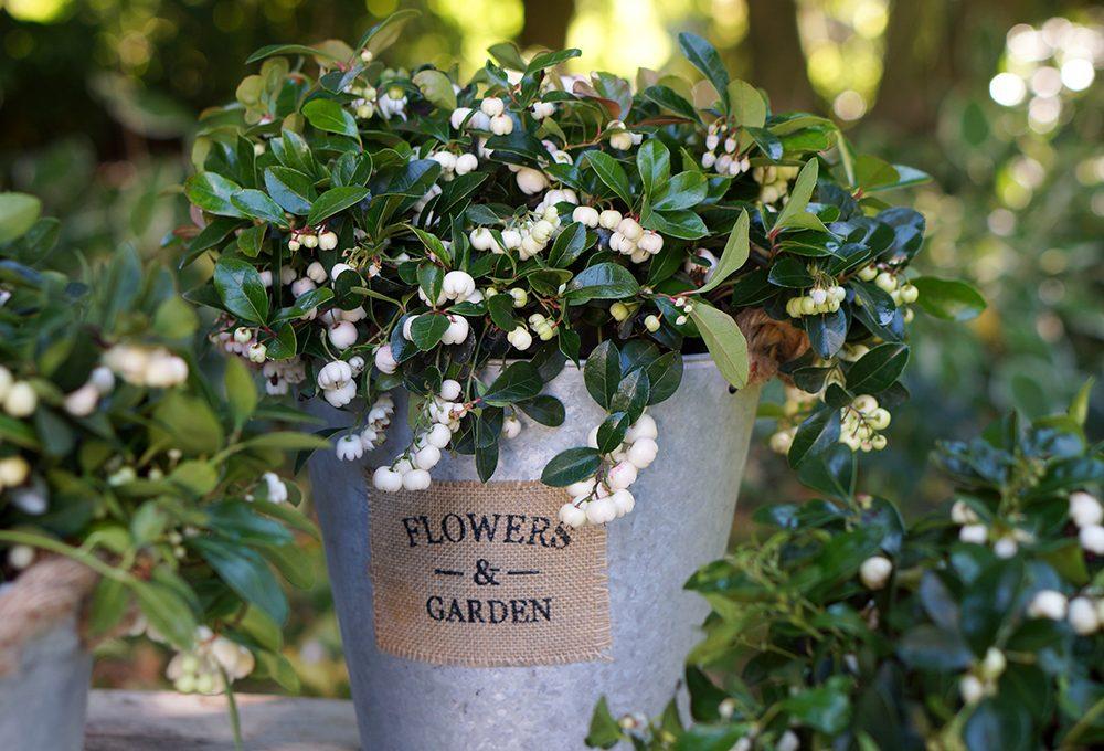 Come curare le piante grasse in inverno casafacile for Curare le piante