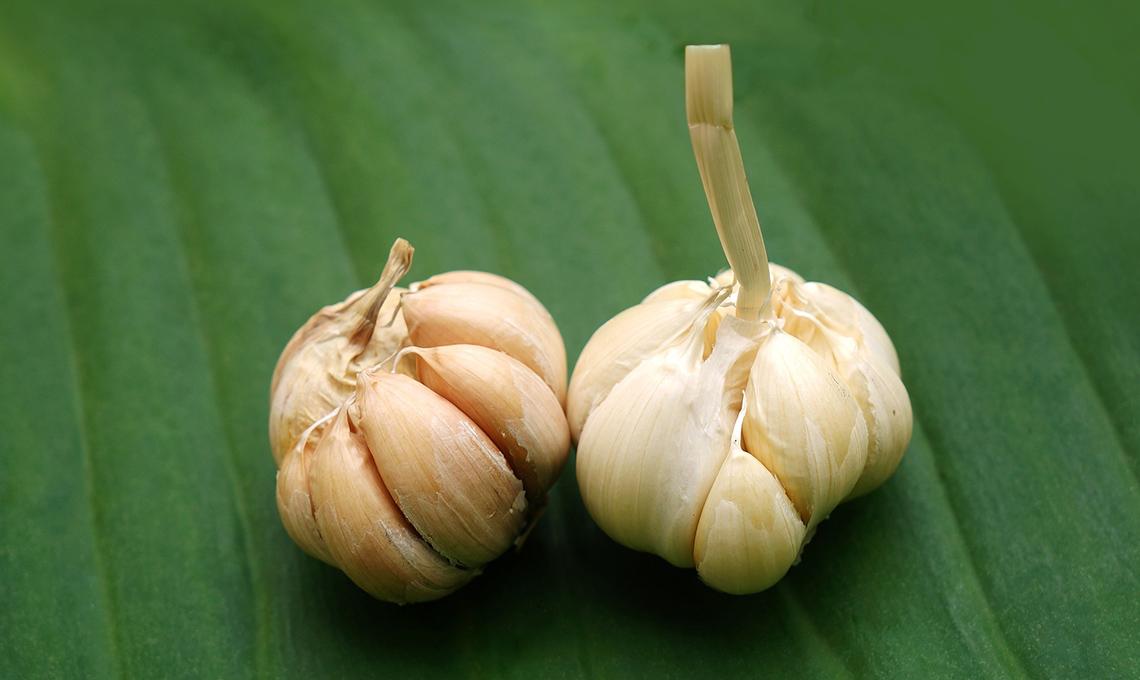 Come piantare e coltivare l 39 aglio casafacile for Quando piantare l aglio