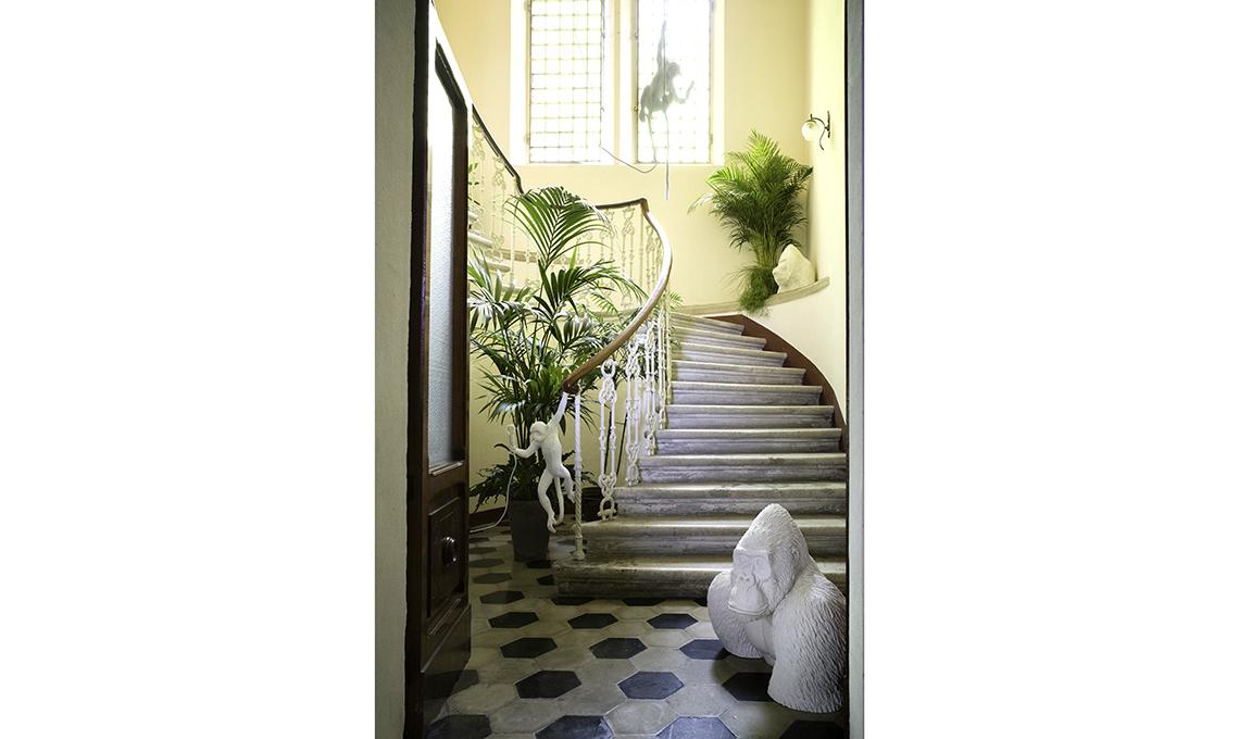 scala ingresso piante