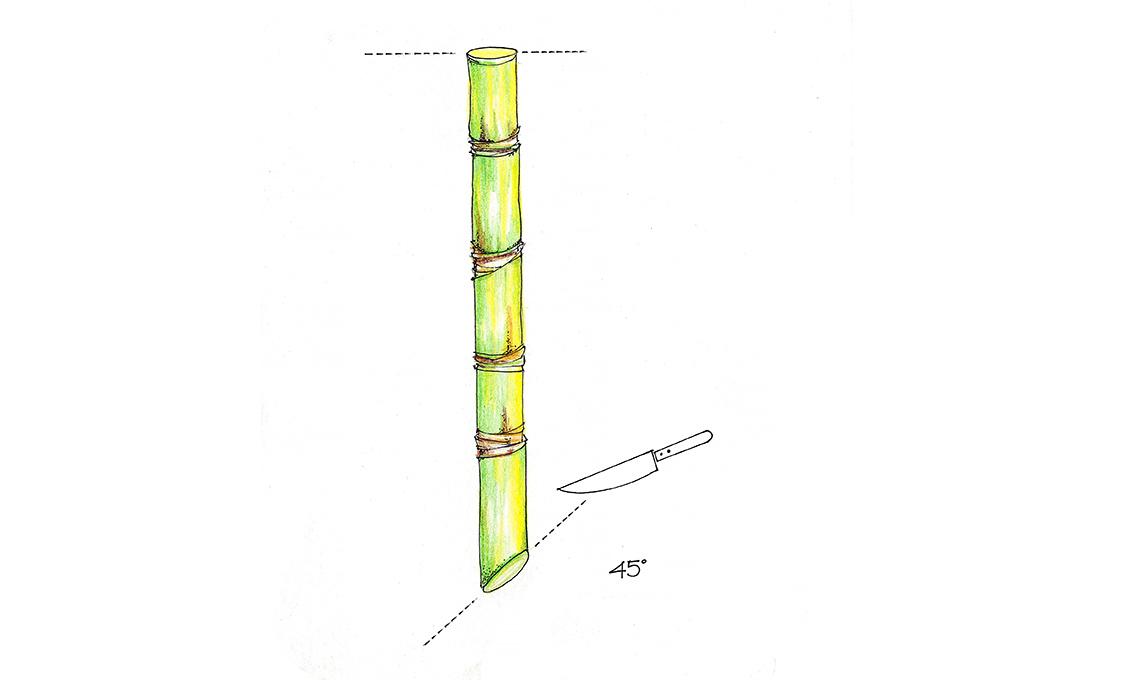 come fare la talea di bambù