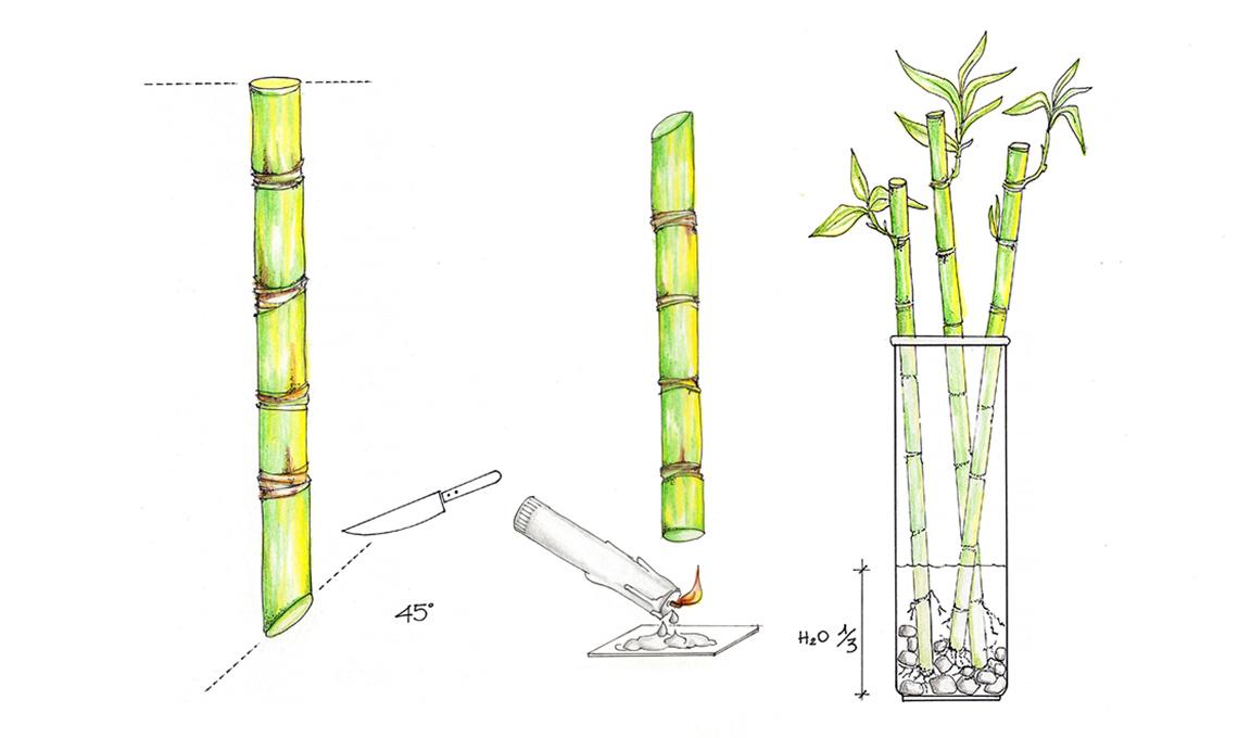 come fare talee di lucky bambù