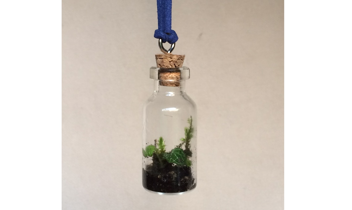 Mini bottiglie con piante.