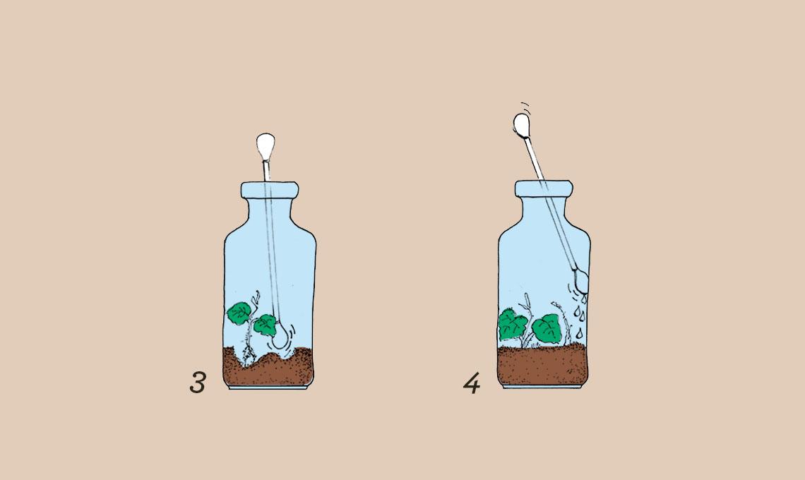 come fare mini terrario