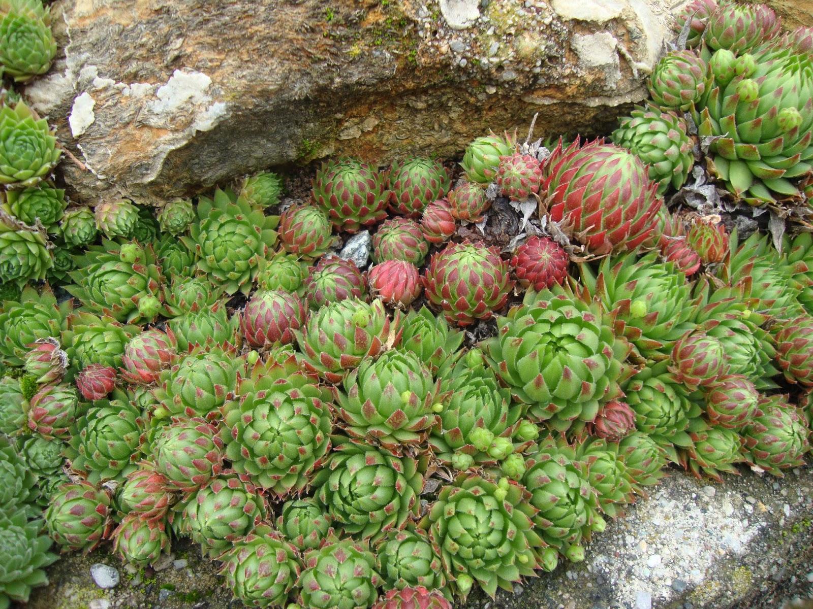 Piante grasse da esterno come sceglierle e curarle - Piante fiorite invernali da esterno ...