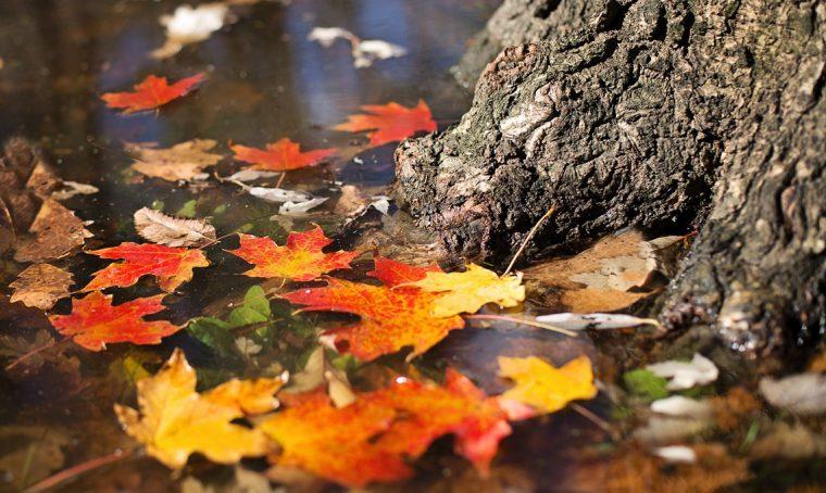 Risparmia fatica: non raccogliere le foglie secche