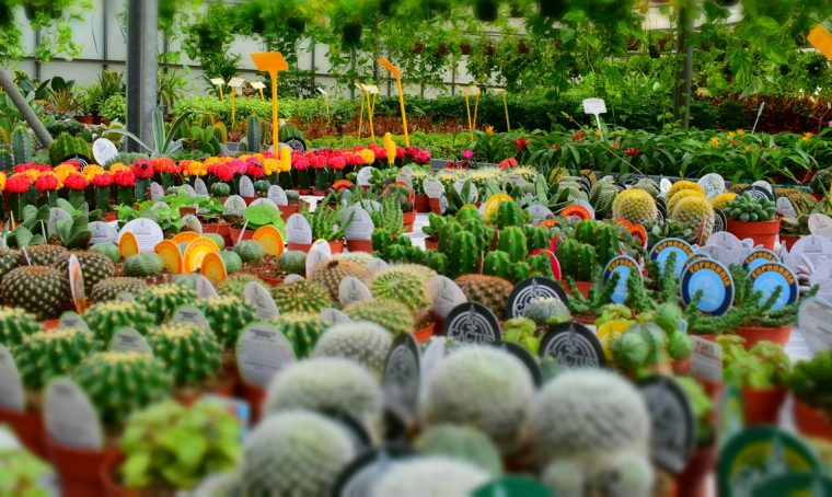 Fiori e piante in mostra a novembre
